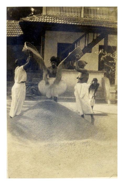 Majeri mid 30s winnowing rice